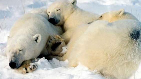 [퀴즈] 진짜 겨울잠을 자는 동물은 사실 없다?