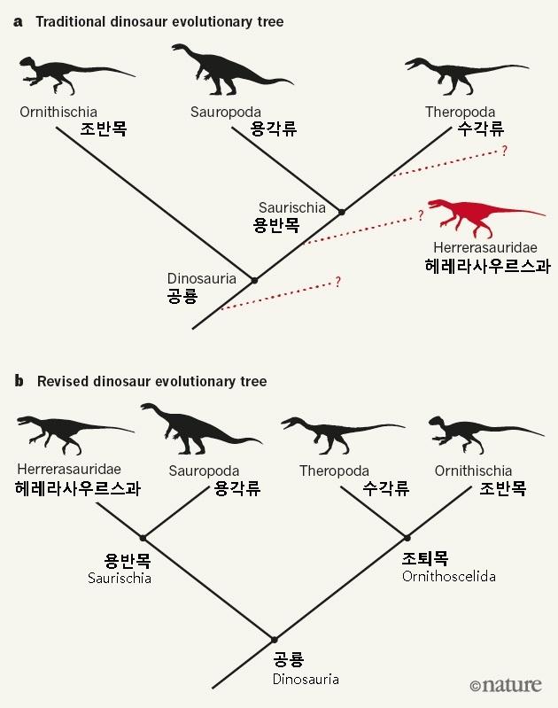 전통적인 공룡의 계통도(위·a)와 영국 연구진에 의해 수정된 새로운 공룡 계통도(아래·b) - 네이처 제공