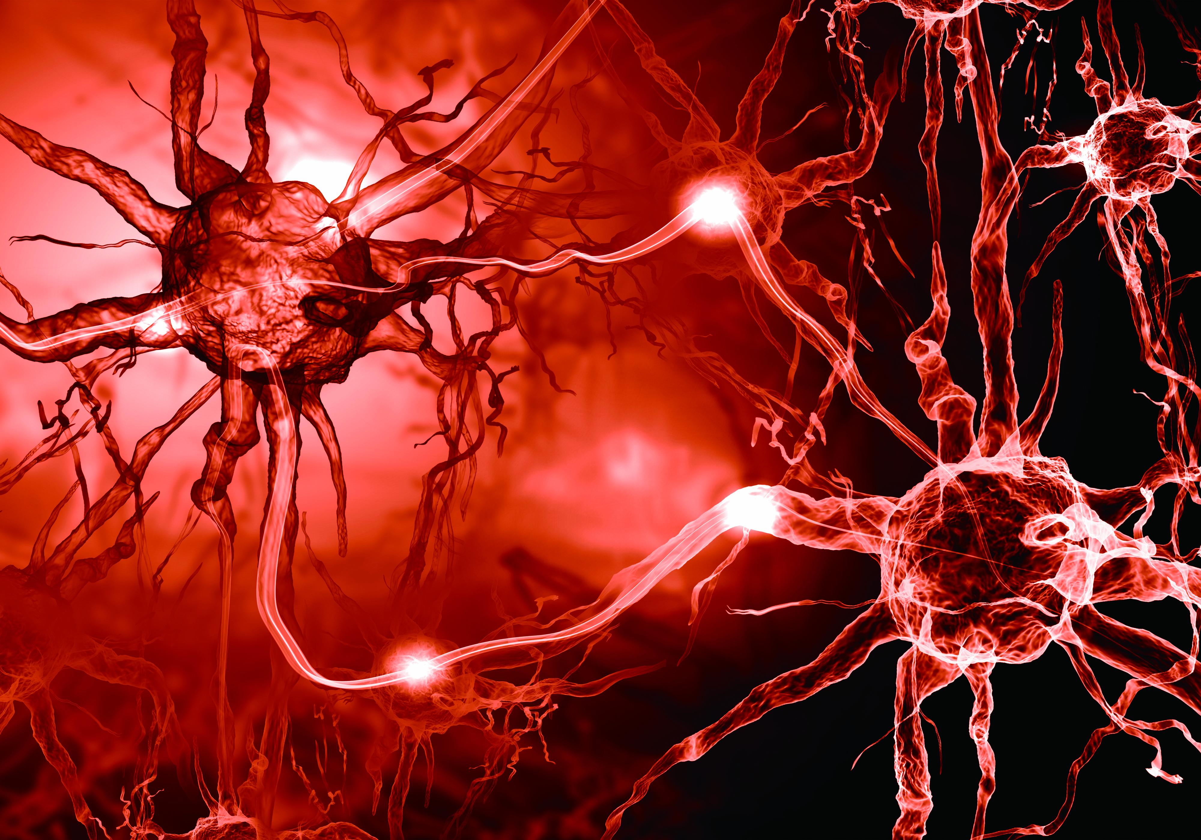뇌 신경세포의 모습. 게티이미지뱅크 제공.