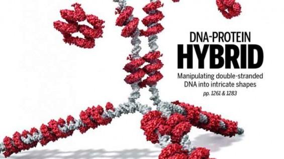 [표지로 읽는 과학]DNA가 세포마다 다르게 발현되는 이유는 '종이접기' 때문