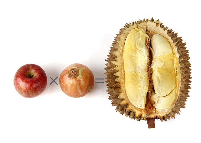 악취와 향기의 경계선에 있는 두리안의 복잡미묘한 향을 과일향과 양파향을 조합해 만들 수 있다는 연구결과가 나왔다. - 성준호 제공