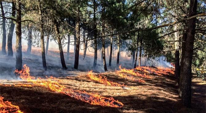 최근 기후변화로 대형 산불이 잦고 생태계도 취약해지면서 산불 정책도 억제 일변도에서 필요할 경우 불을 내는 전략으로 전환되고 있다. 스페인 동남부 알바세테의 한 숲에서 계획적으로 불을 놓은 장면이다. - Carla Vilarasau/the Pau Costa Foundation 제공
