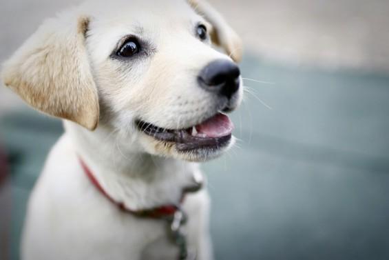 [퀴즈] 강아지가 열나면 사람 해열제를 조금 먹여도 된다?