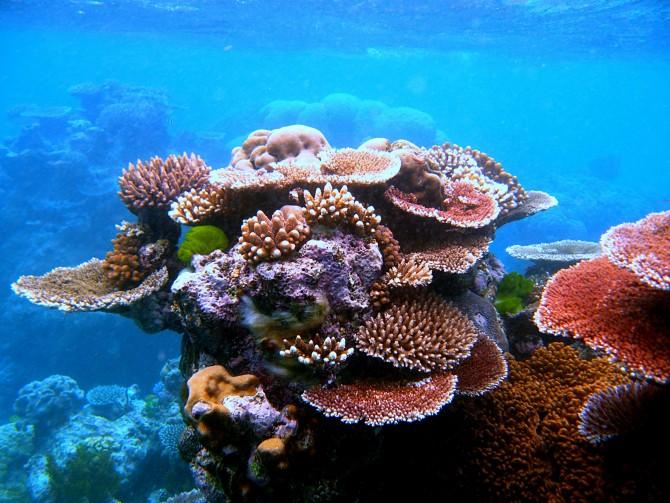 그레이트배리어리프 지역 산호초(백화현상 전) - 위키미디어 제공
