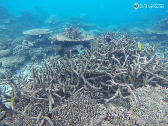 그레이트배리어리프 지역의 산호초(백화현상 후) - 호주ARC센터 제공