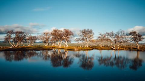타임랩스 영상, 아름다운 노르웨이의 사계절