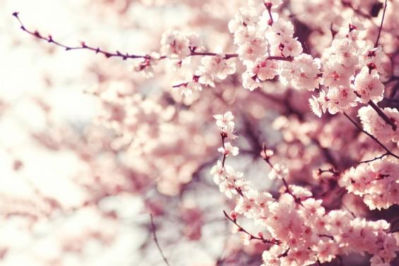 봄 타는 식물, 꽃 피우는 비밀