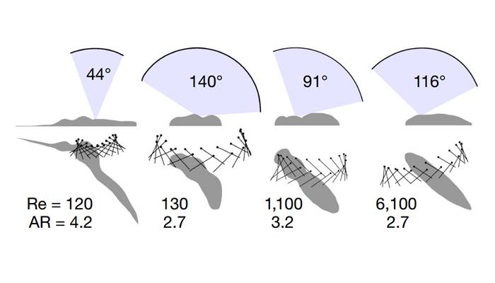 맨 왼쪽부터 모기, 초파리, 꿀벌, 박각시나방의 날개가 움직이는 각도와 레이놀즈 수(Re), 날개의 가로세로비(AR)를 측정해 정리한 결과. 비교한 곤충의 크기가 모두 다르므로, 날개의 길이를 같은 값으로 맞춰 다른 정보를 계산했다. 모기는 날개의 움직임 각도와 레이놀즈 수가 가장 작고, 날개의 가로세로비의 값이 가장 컸다. - nature 제공