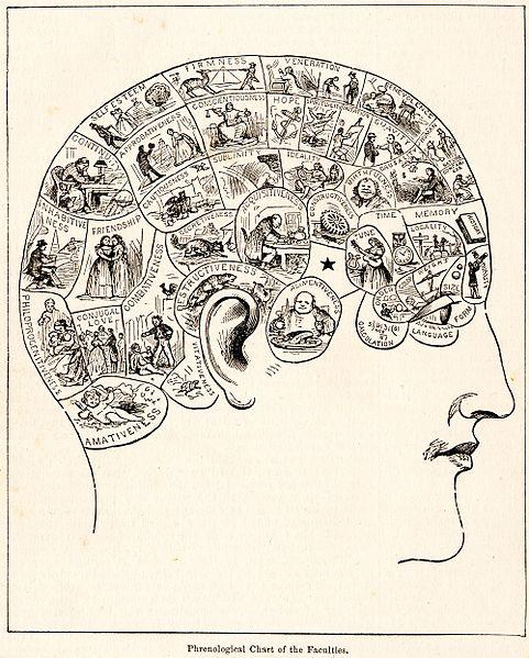 인간의 뇌는 범용 컴퓨터이기보다는, 여러 가지 전용 앱이 깔린 스마트폰에 가깝다. 그림은 두개골의 각 부분에, 각각 해당하는 기능이 다르다고 생각한 골상학의 개념도. - wikimedia 제공