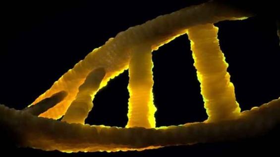 크리스퍼 방식보다 정확한 차세대 유전자 가위