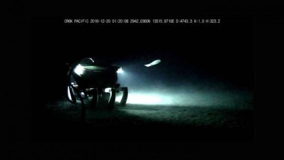 """[최초 공개] """"여기는 해저 4743m"""" 해저 탐사로봇이 촬영한 바다 속 세계"""