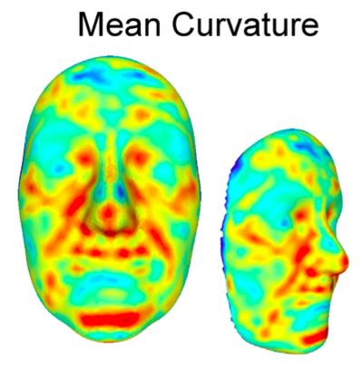 곡률을 분석해 산출한 유전도를 보여주는 얼굴의 3D 이미지다. 파란색이 유전도가 낮고 빨간색이 높다. 코끝과 입술 위쪽과 아래쪽, 눈 안쪽, 코입술주름(팔자주름) 부근이 유전도가 높음을 알 수 있다. - 사이언티픽 리포츠 제공
