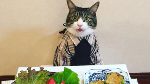 식탁에 앉은 고양이 'SNS 인기'