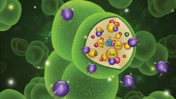 오염수 속 방사성폐기물 먹어 치우는 미생물 개발