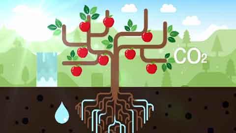 [영상] 풀과 나무는 어떻게 자랄까요?