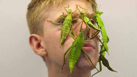 독일의 유별난 곤충 애호가