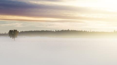 몽환적인 스웨덴의 아침 풍경