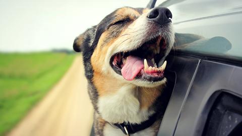 [사이언스 지식IN] 강아지와 여행가고 싶은데 멀미가 걱정이에요