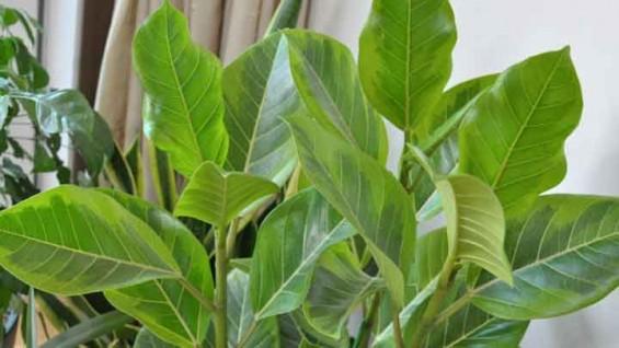 [강석기의 과학카페] 미세먼지 줄이는데 식물이 얼마나 효과가 있을까?