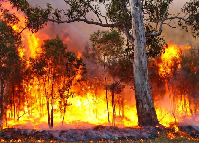 산불은 넓은 지역에서 장기간 진행되는 특징이 있다. 그래서 종종 마을 전체가 타버리는 경우도 있으며, 지역 사회에 대규모의 심리적 트라우마를 남기기도 한다. - flickr 제공