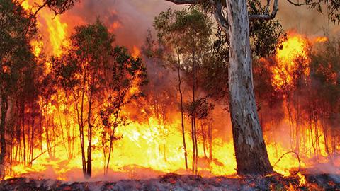 산불 이후 트라우마 회복을 위한 정신건강지침