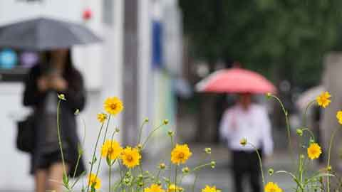 [13일 날씨] 주말 날씨도 '흐림'…전국 구름 많고 곳곳 비
