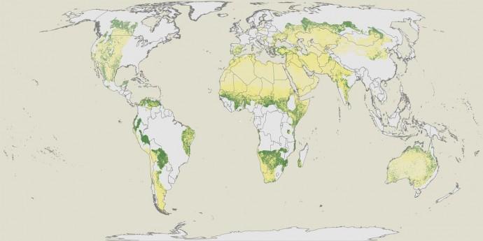 바스틴 교수가 이끈 FAO 연구팀은 지구상 건조 산림 지대를 한눈에 보기 쉽게 지도 위에 색을 달리해 나타냈다. - Science 제공
