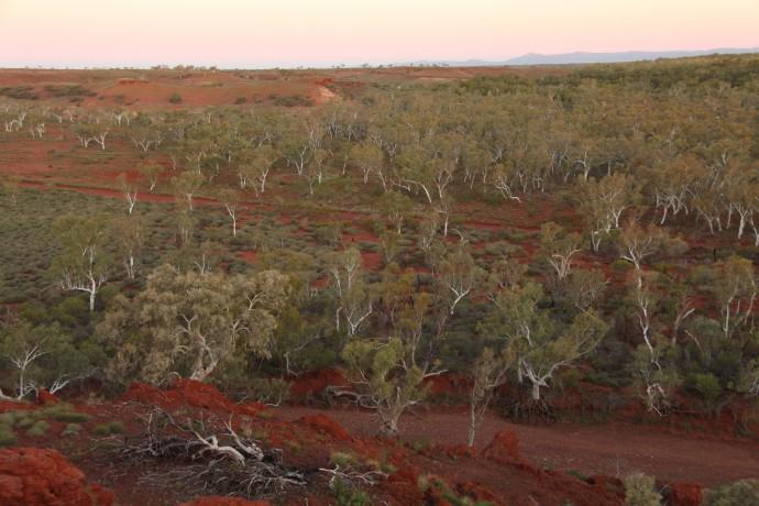 연구팀이 이번에 새로 발견한 건조 산림 지대 중 한 곳. - TERN Auspots 제공