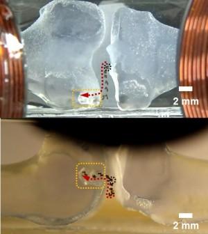 외부 자기장 제어를 통해 목표위치로 이동하는 마이크로로봇의 시간경과 이미지. - 전남대 로봇연구소 제공
