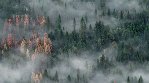 미국 캘리포니아, 안개 자욱한 숲