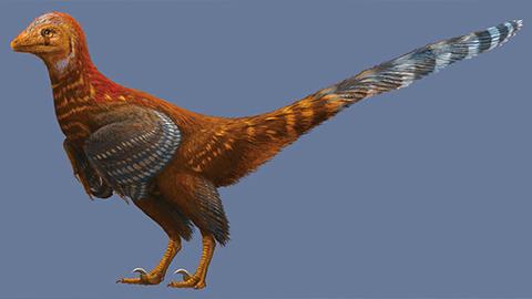 공룡이야, 닭이야? 깃털 가진 소형 수각류 공룡 발견