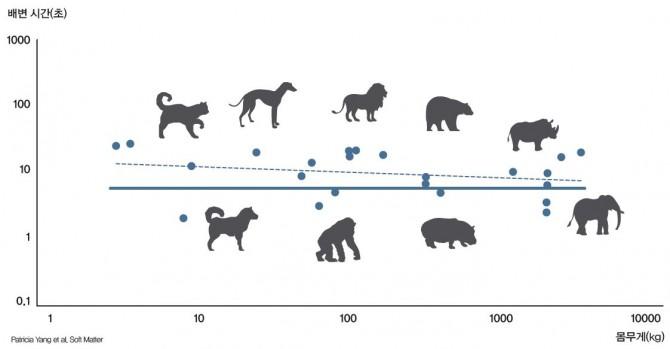 고양이부터 코끼리까지 배변 시간이 약 12초(점선)로 비슷하다. 실선은 연구팀이 만든 수학모델로 예측한 몸무게 별 배변 시간. - Patricia Yang et al. Soft Matter 제공