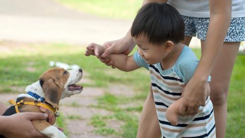 [반려동물 정책제안 ③] 동물병원 진료비를 결정하기 위한 연구가 필요하다