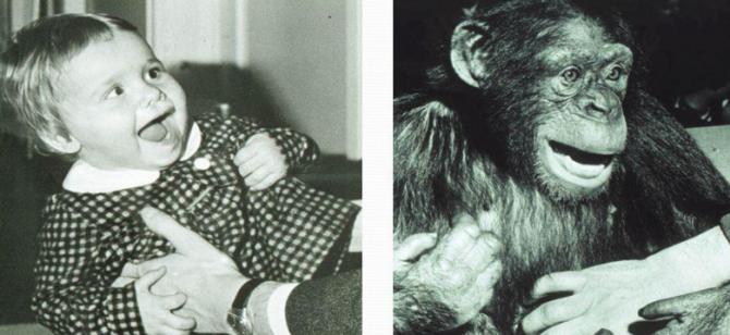 인간의 웃음과 침팬지의 ROM (relaxed open mouth display). 동일한 진화적 기원을 가지고 있을 것으로 추정된다. - http://slideplayer.it/slide/940568/ 제공