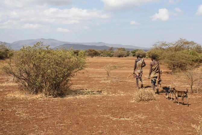 탄자니아의 하드족 남자들은 매일 수십km를 이동하는 생활을 하지만 하루 칼로리 소모량은 정적인 생활을 하는 선진국의 사람들과 비슷하다는 사실이 밝혀졌다. 운동으로 칼로리 소모량을 늘려 살을 뺀다는 전략이 별 효과가 없다는 증거다. - 위키피디아 제공