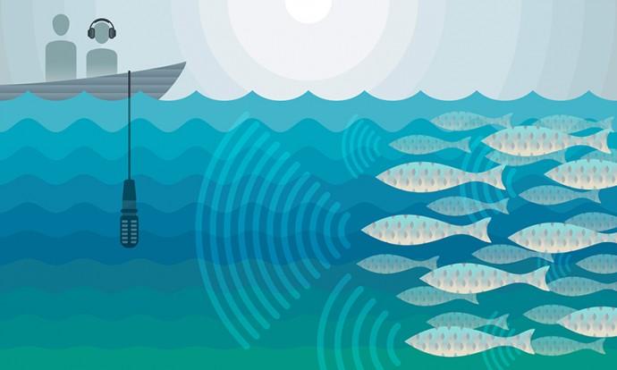 과학자들은 물고기들이 내는 소리를 분석해 수산자원 관리에 활용하려 하고 있다. 산란기에 사랑을 나누기 위해 모여드는 물고기들을 보호하면 수산자원의 지속 가능성을 높일 수 있다. - 미국 텍사스대 제공