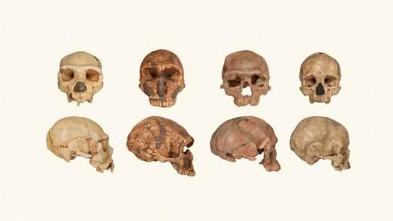 네안데르탈인 화석, 알고 보니 호모 사피엔스!