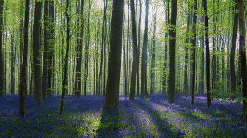 알레어보, 현실에 존재하는 마법의 숲