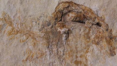 세계에서 가장 오래된 버섯 화석 발견!