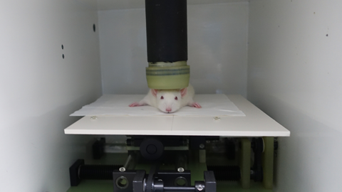 해부하지 않고도 실험 동물 변화 알 수 있다