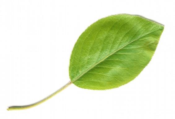 식물이 뜨거운 태양 아래서 화상 입지 않는 비결은?