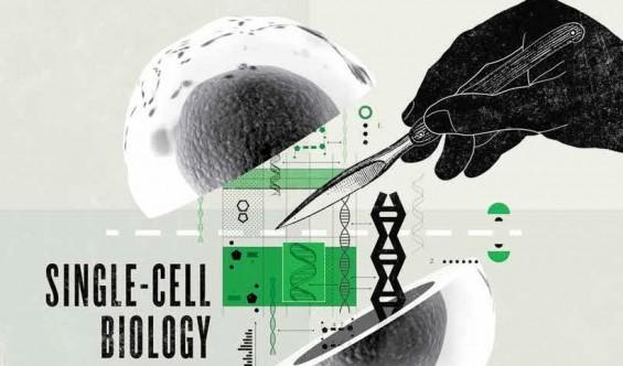 과학자들이 세포 하나에 관심을 갖는 이유
