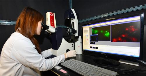 한국과학기술연구원 의공학연구소 연구진이 새롭게 개발한 줄기세포 표지 기술을 현미경을 통해 확인해 보고 있다. - 한국과학기술연구원 제공