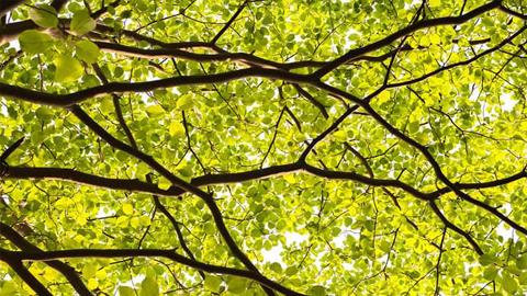 [詩로 가는 길목 1] 벚나무를 올려보며