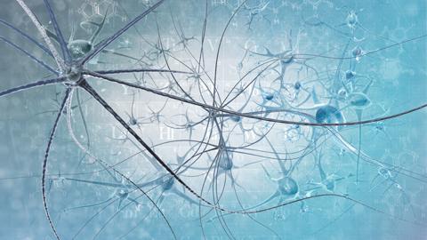 피부세포→신경세포 변신시켜 파킨슨병 고친다