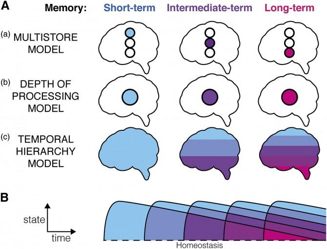 (현재까지 기억에 관한 3가지 모델이 존재했다. 단기기억과 중기기억, 장기기억이 각각 저장되는 위치가 다르다는 '다중 저장 모델'(a)과 기억마다 뇌에 각인되는 강도가 다르다는 '처 리강도 모델'(b), 시간이 지남에 따라 자주 떠올리는 기억이 오래간다는 '시간층 모델(c)'이다. 시간층모델은 외부자극에 따라 자주 떠올려지는 단기기억이 장기기억으로 변한다고 설명한다.) - New York University 제공