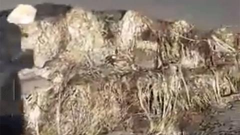 사할린 해변의 미스터리 거대 사체