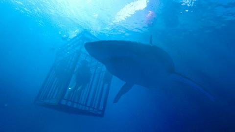 '상어' vs '깊은 바다 밑바닥' 뭐가 더 무서울까
