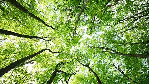 식물과 두뇌의 성장이 유사하다?