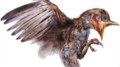 호박 속에 생생하게 남은 9900만 년 전 아기 새